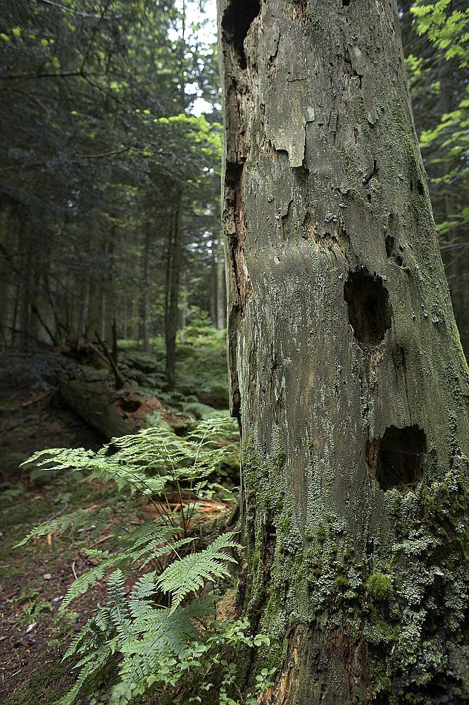 La forêt du Varday est malade